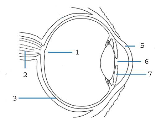Simple eye diagram no lables online schematic diagram basic eye diagram no labels search for wiring diagrams u2022 rh idijournal com not of the human eye diagram labeled eye anatomy labeling ccuart Images
